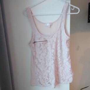 Rosa linne